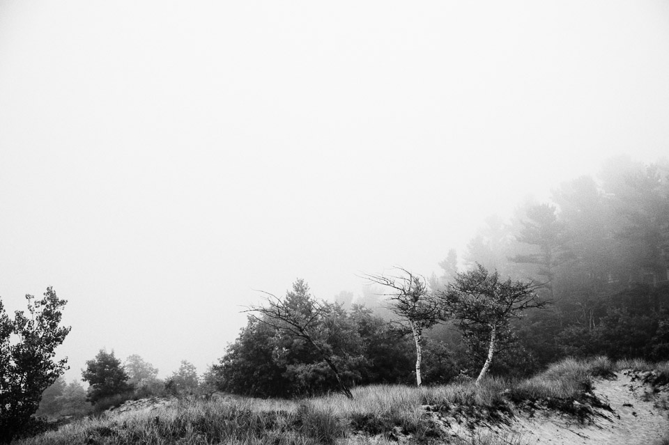 foggy-sand-dune-trees-landscape
