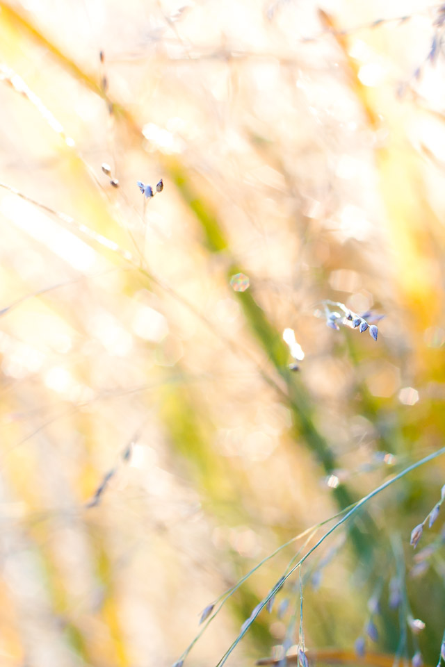 yellow-green-fall-grasses