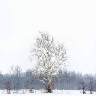 Winter Tree 3